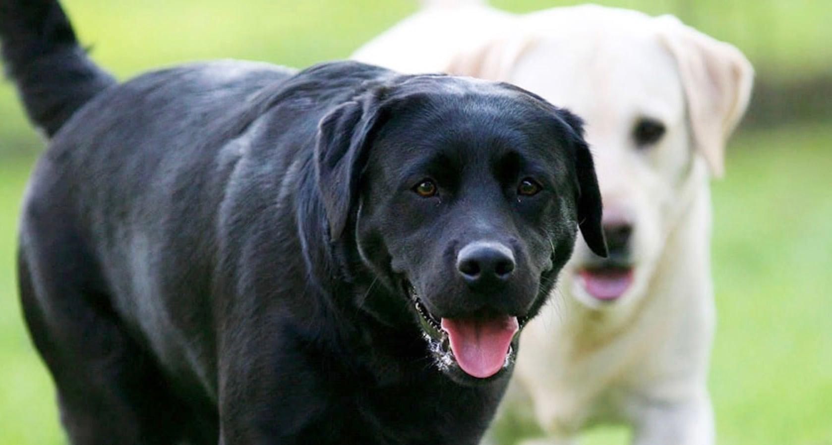 How to Prevent Dog Bite Liability
