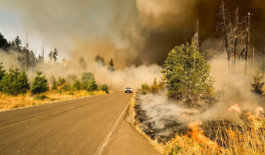 Driving Through a Forest Fire