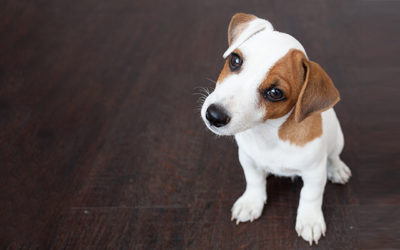 Pet Liability Concerns You Need to Know About
