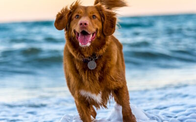 How to Keep Your Pets Cool This Summer
