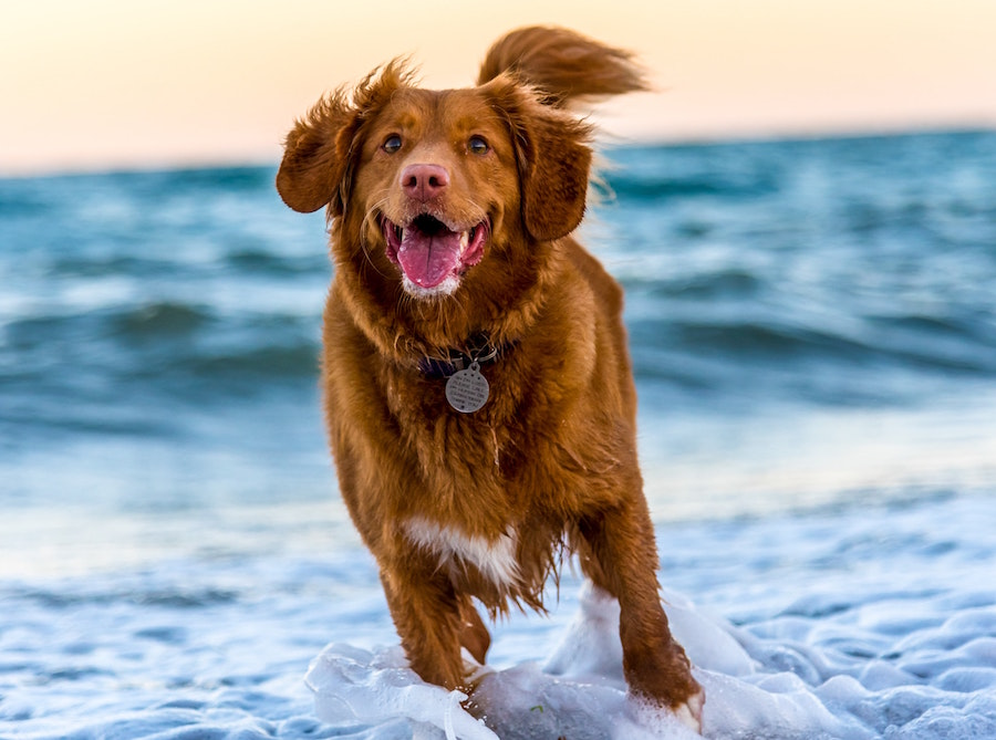 How to Keep Your Pets Cool in Summer