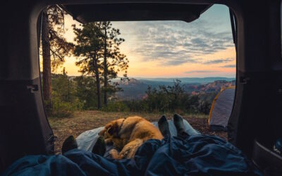 Tips to Fun (and Safe) Camping With Your Dog